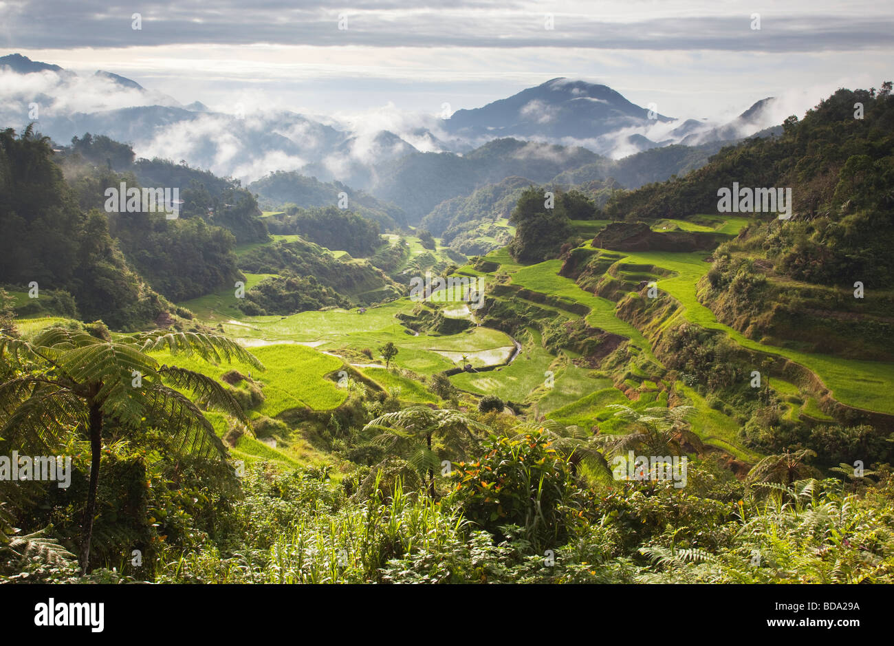 Rice terraces Banaue Ifugao Province Northern Luzon Philippines - Stock Image