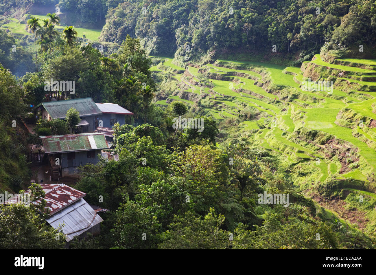 Houses and rice terraces Banaue Ifugao Province Northern Luzon Philippines - Stock Image