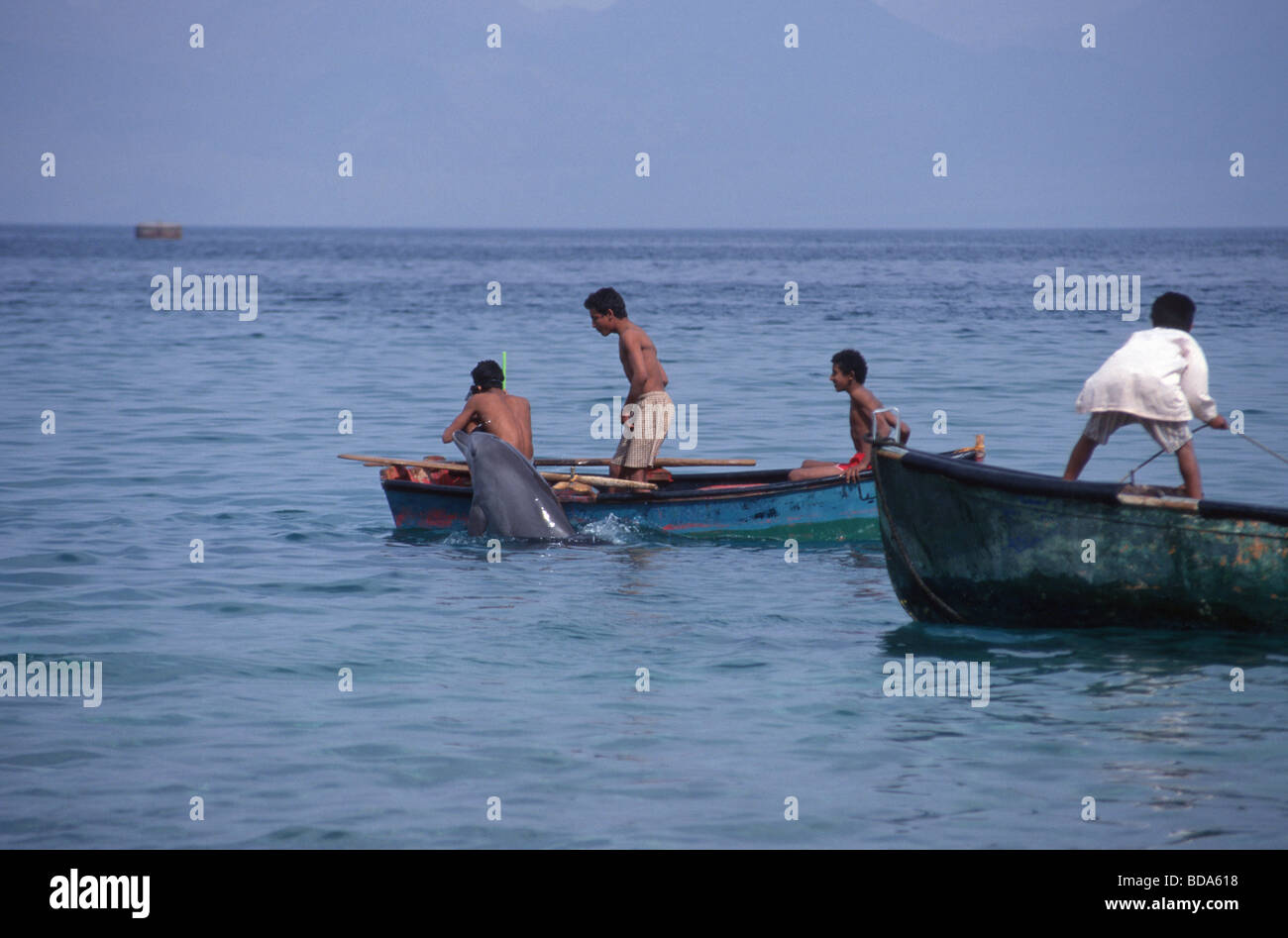 Young man in rowboats interacting with a solitary sociable bottlenose dolphin Tursiops aduncas named Holly in Nuweiba, - Stock Image