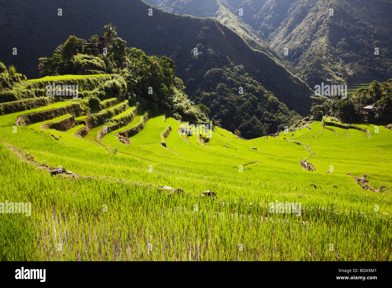 Rice terraces Batad Ifugao Province Northern Luzon Philippines - Stock Image