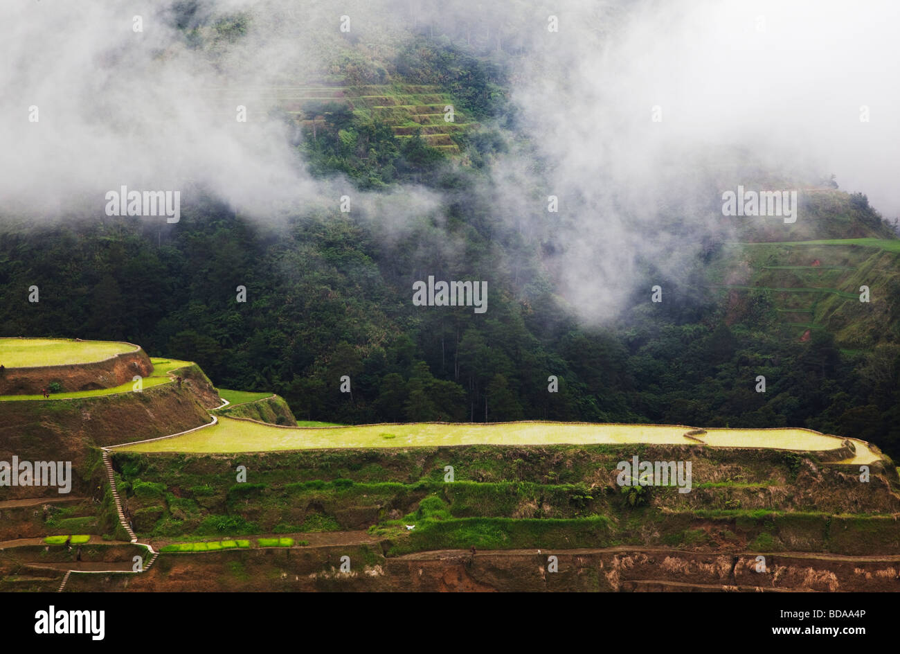 Rice terraces at Banaue Ifugao Province Northern Luzon Philippines - Stock Image