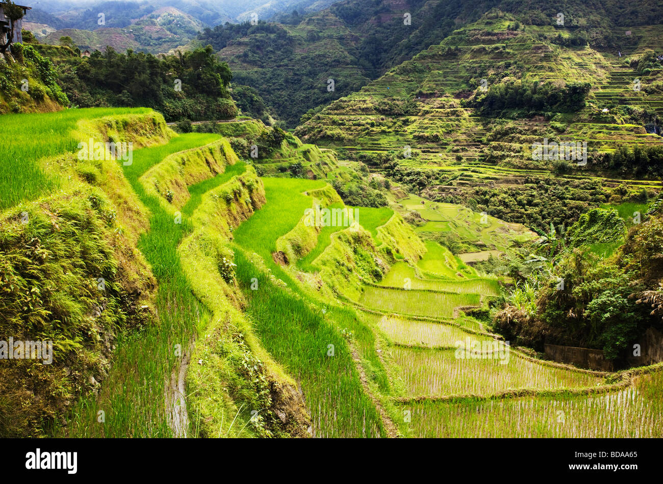 Rice terraces in Banaue Ifugao Province Northern Luzon Philippines - Stock Image