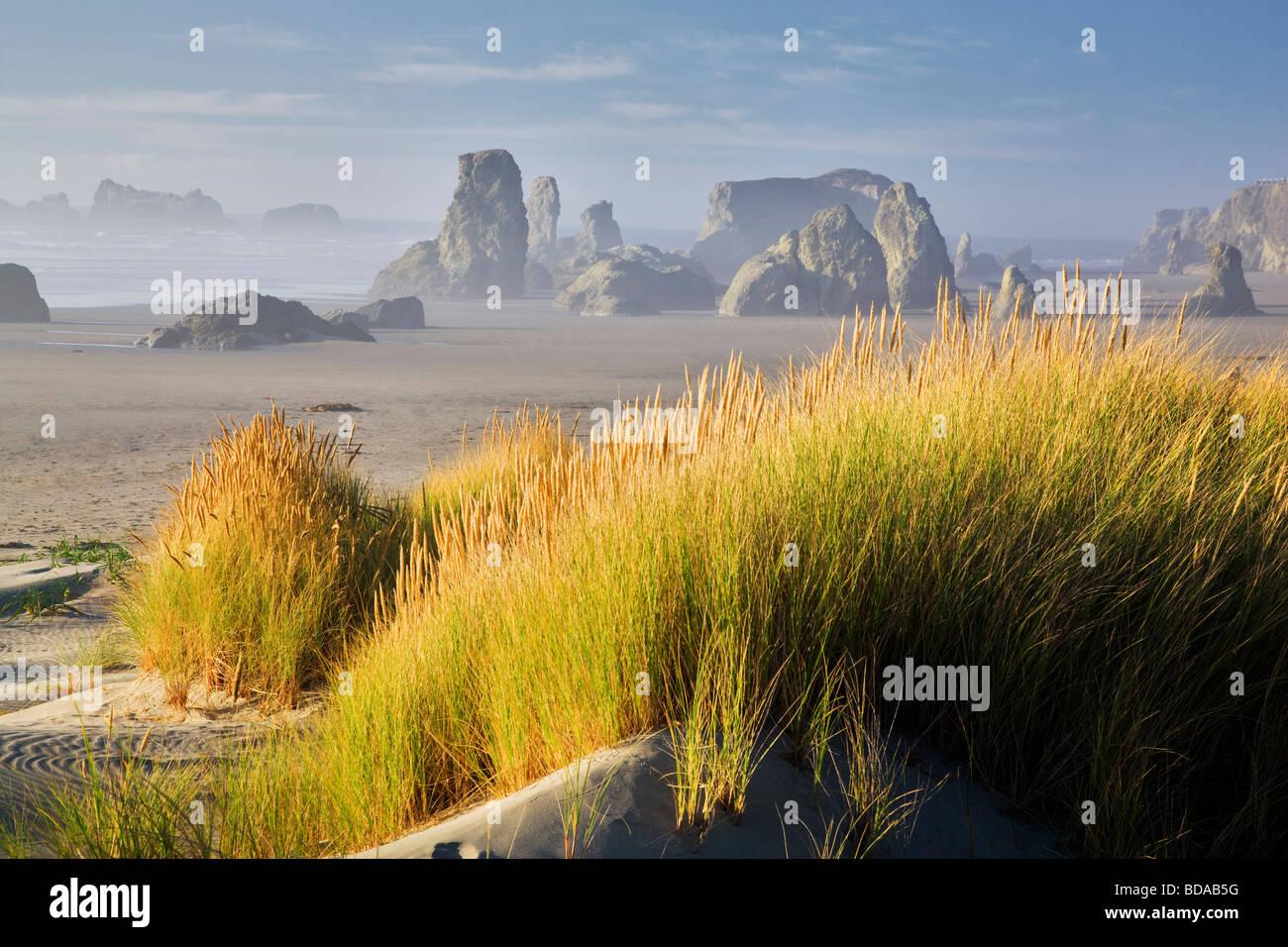 Dune grass and sea stacks at Bandon Beach Oregon - Stock Image