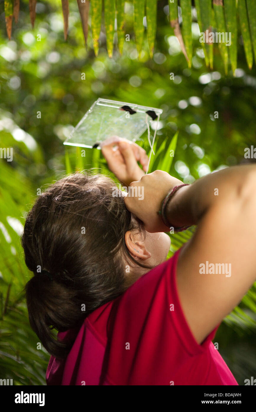 Indonesia Sulawesi Operation Wallacea sixth form student studying canopy density with improvised tool - Stock Image
