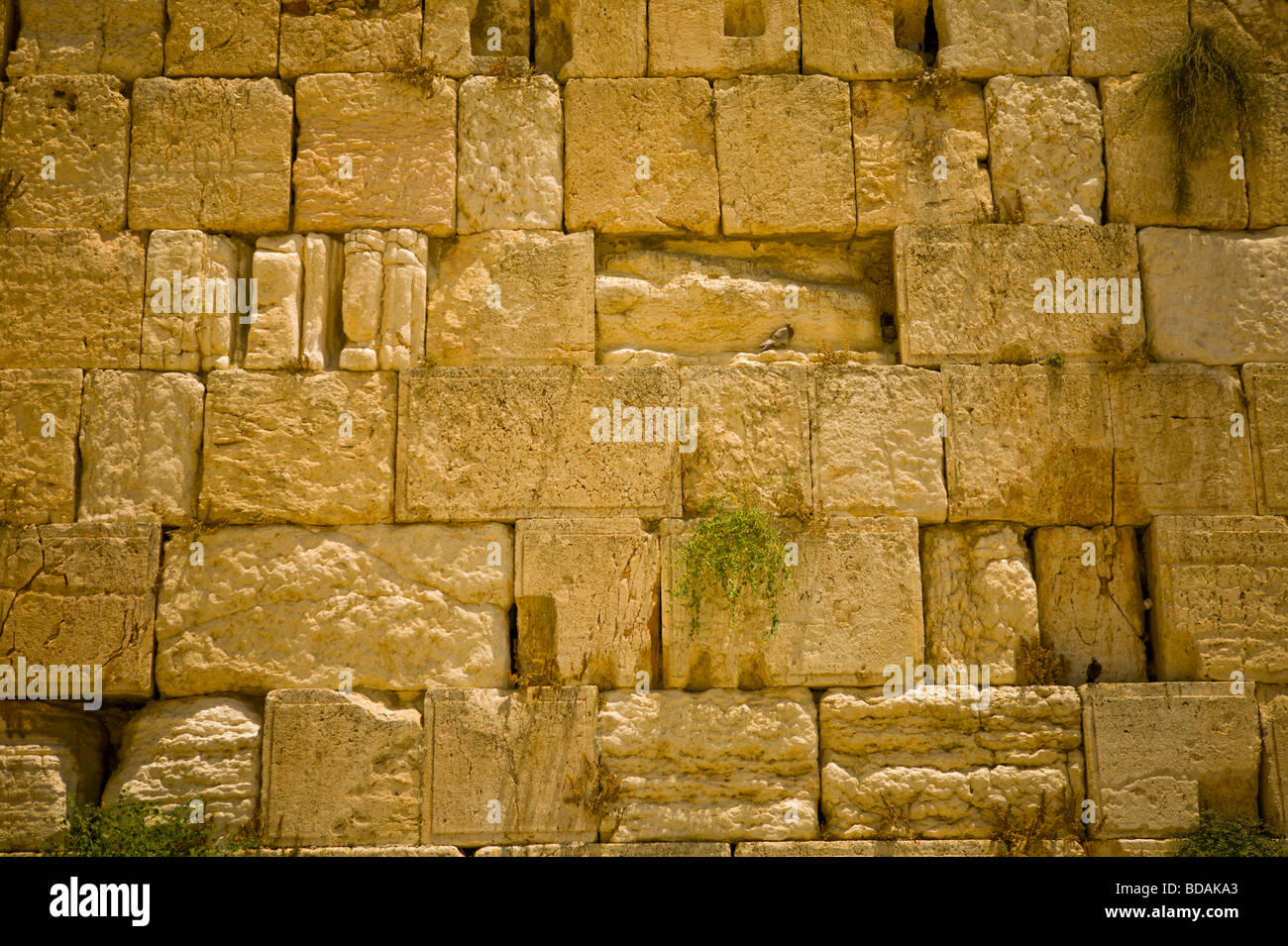 Closeup detail of the wailing wall in Jeruslaem - Stock Image