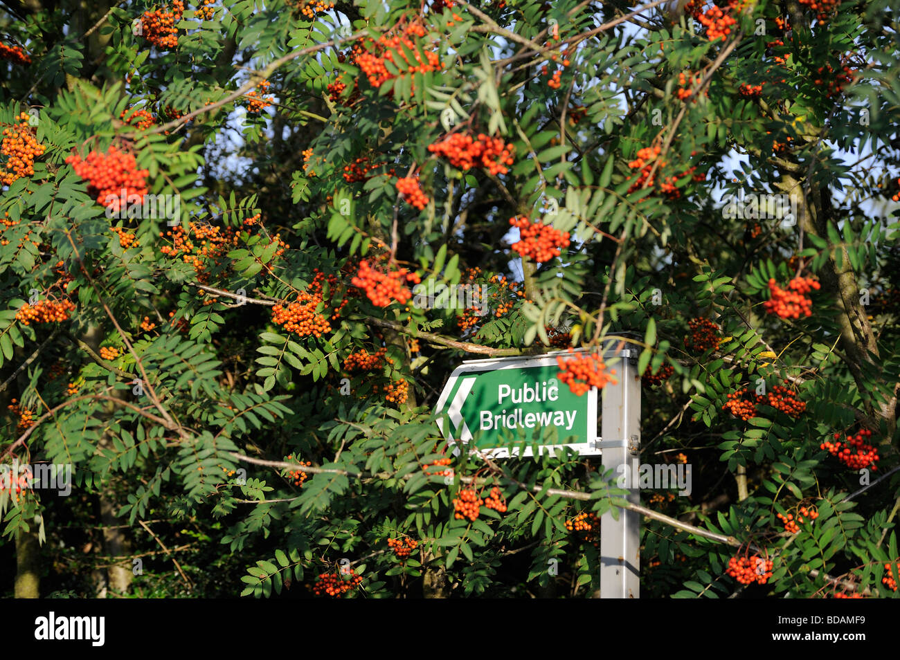Public Bridleway sign walking rambling countryside  North East England - Stock Image