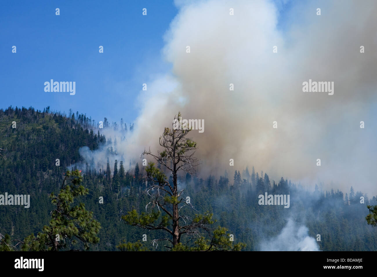 A forest fire in early stages caused by lightning Deschutes National Forest near Sisters Oregon - Stock Image