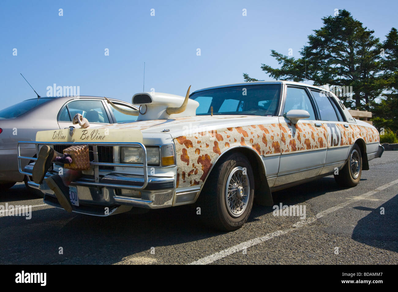 Bovine themed art car from Oregon seen at Yaquina Bay - Stock Image