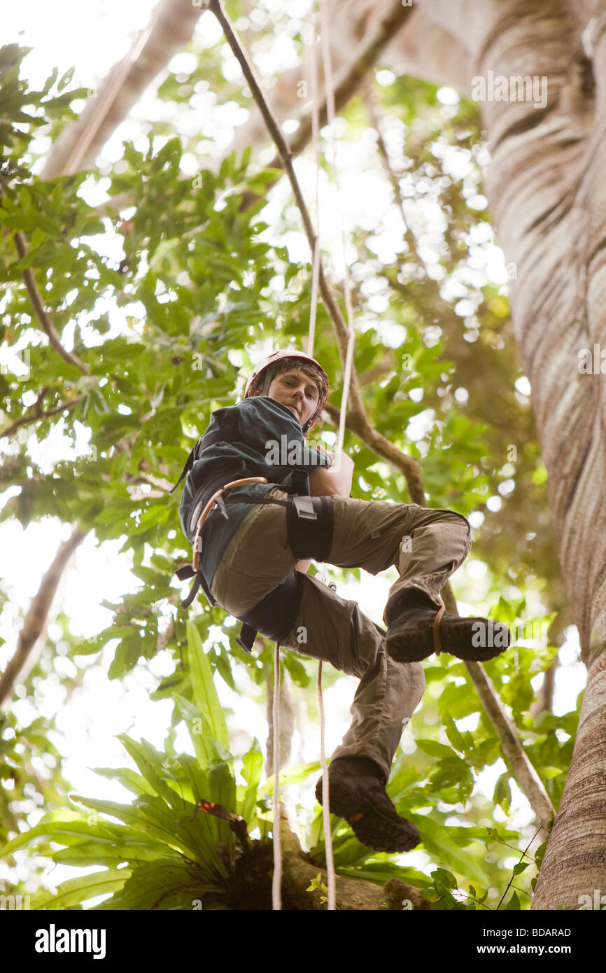 Indonesia Sulawesi Operation Wallacea Lambusango forest reserve canopy access student high in tree - Stock Image