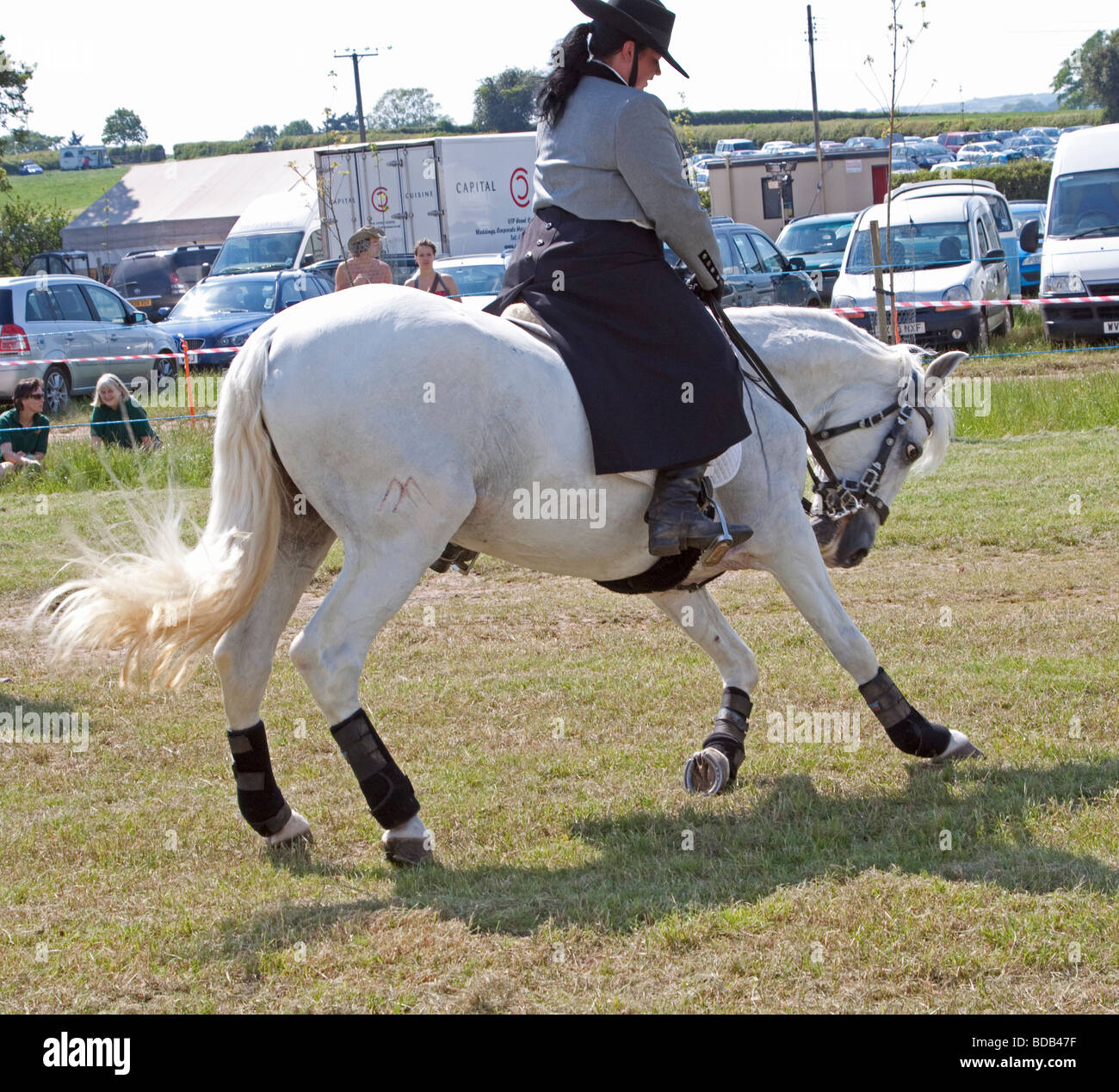 White Lusitano horse doing a dressage demonstration at Hay on Wye Literary Festival - Stock Image