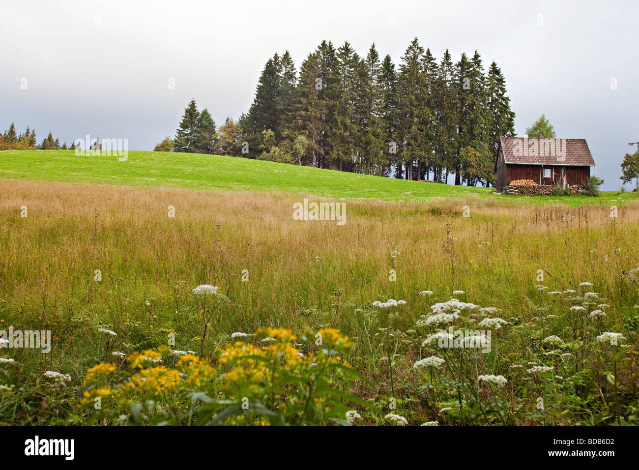 Hill in Schwarzwald on the European Watershed line next to Danube river sources. Schwarzwald, Germany. - Stock Image