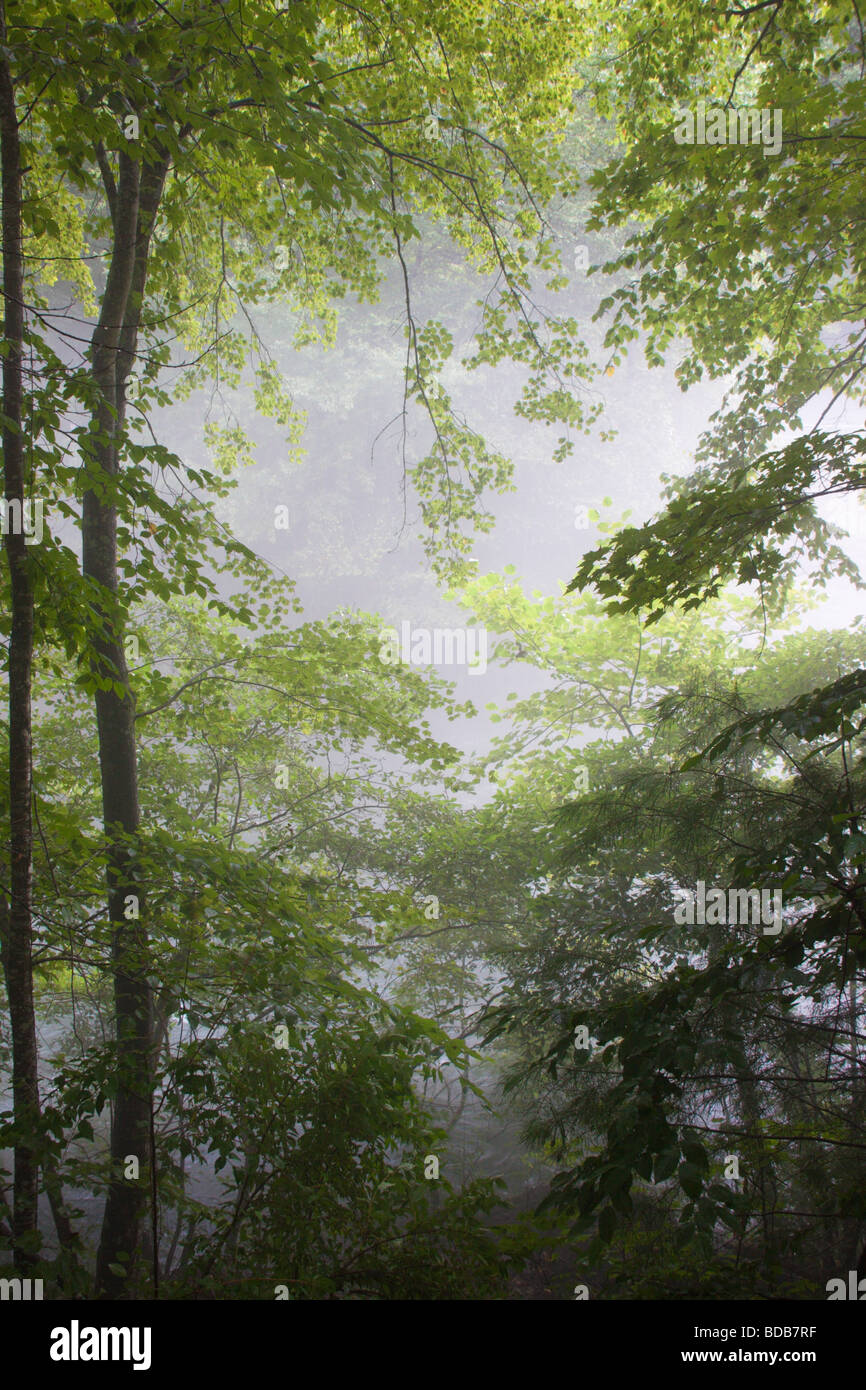 Woods and fog along the Smith River in Virginia, USA - Stock Image