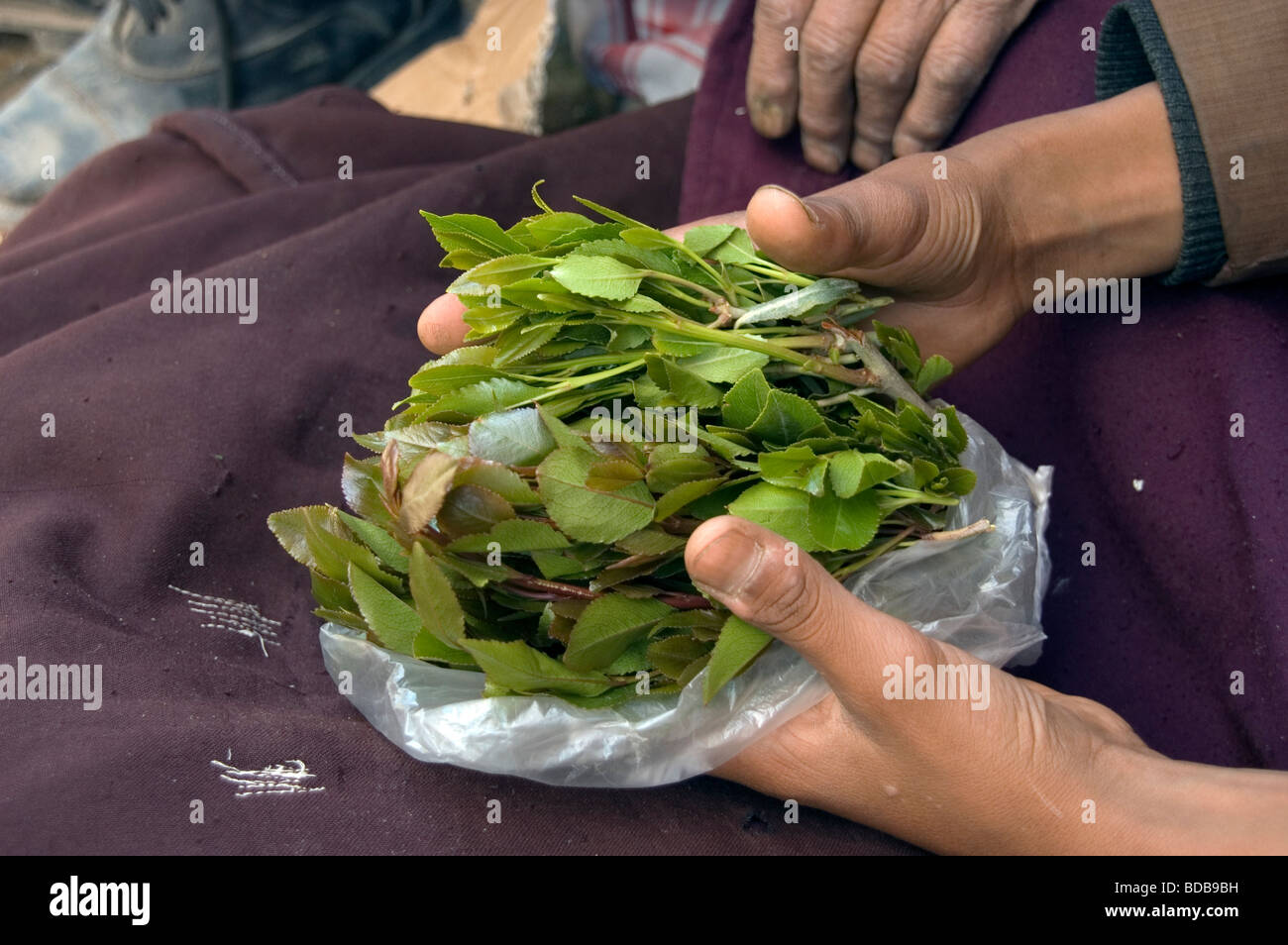 A Yemeni boy holds a small bag of khat leaves - a legal drug and stimulant - in the khat market in Sana'a, Yemen. - Stock Image