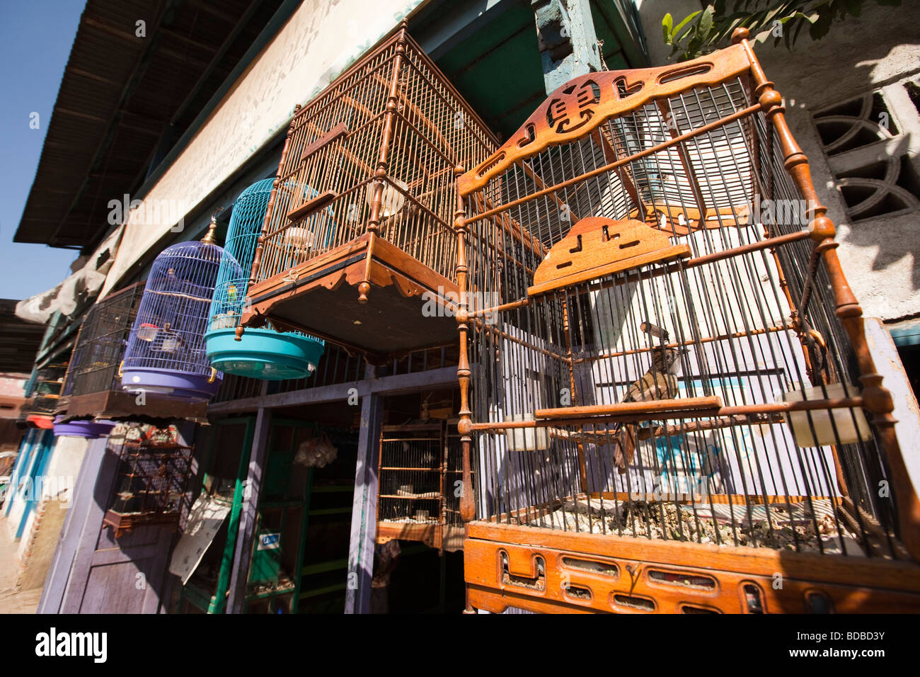 Indonesia Sulawesi Barru caged songbirds for sale outside shop - Stock Image