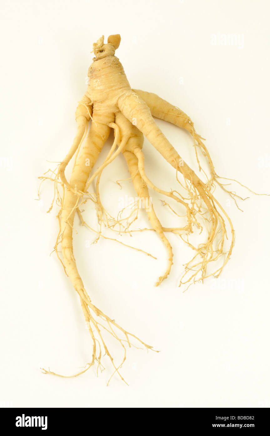 panax ginseng how to leave in alcohol