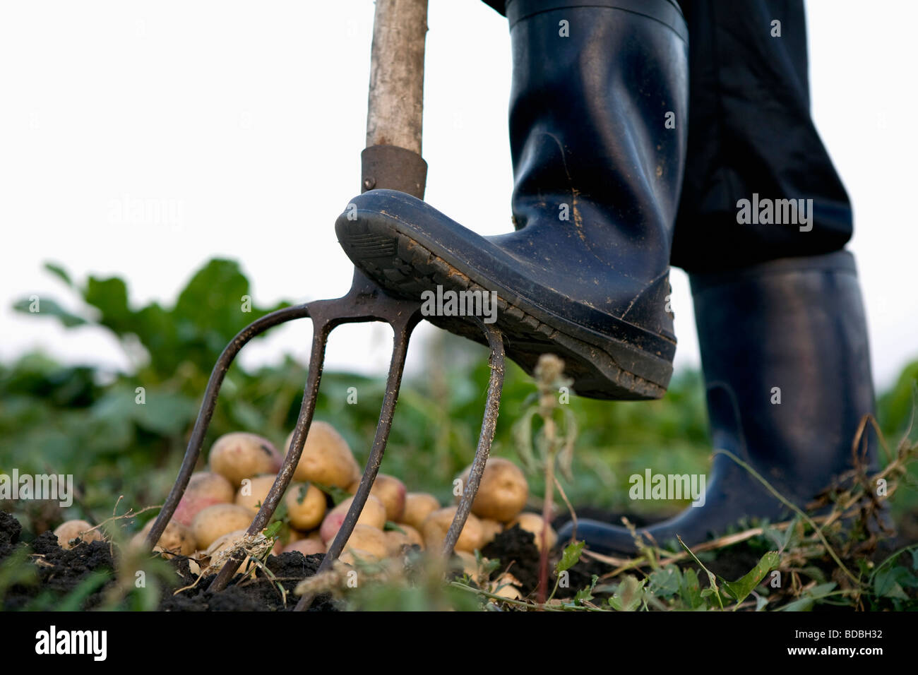 detail of farmer in rubber boots using pitchfork Stock Photo