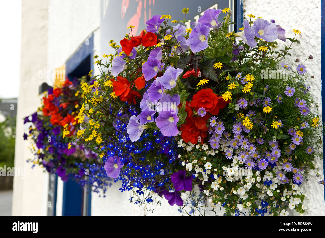 Hanging baskets of flowers - Stock Image