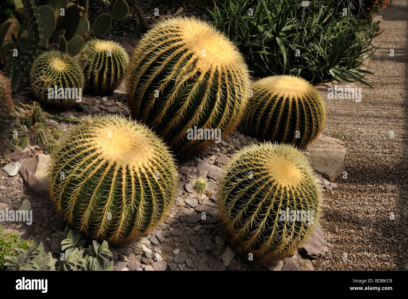 Medicinal Desert Plant High Resolution Stock Photography And Images Alamy