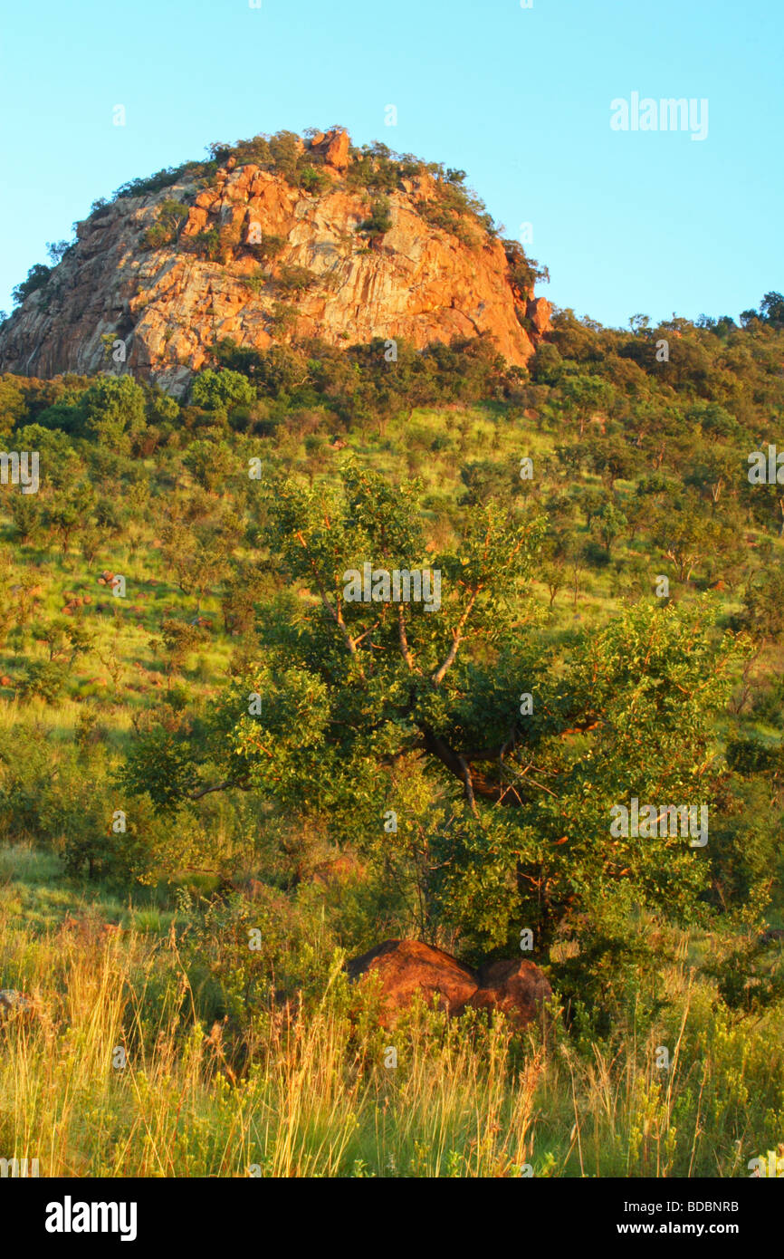 Early morning sunshine on a rocky outcrop in the Pilanesberg Game Reserve, Northwest Province, South Africa - Stock Image