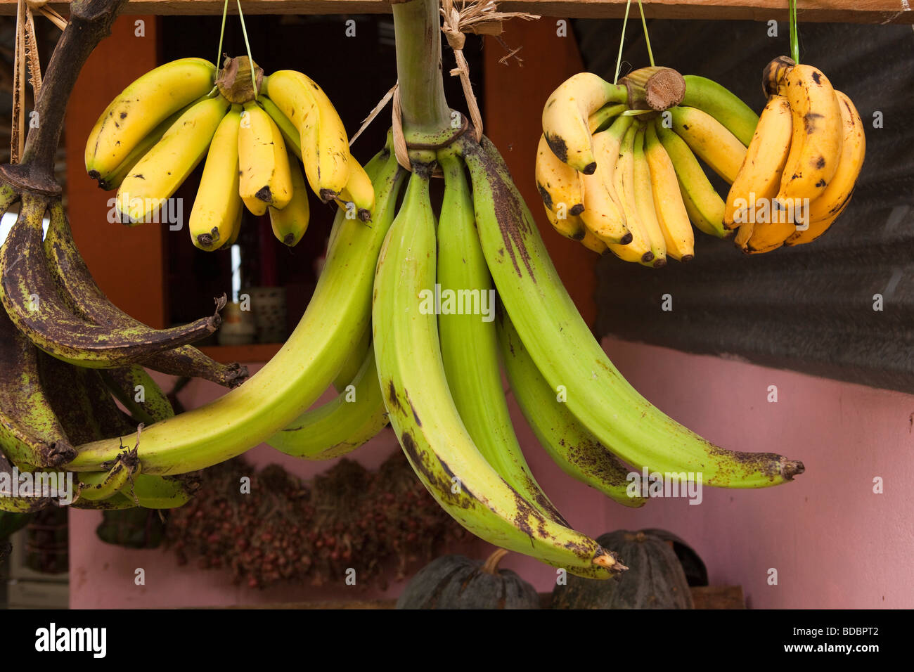Indonesia Sulawesi Tana Toraja Makale locally grown bananas hanging up for sale at roadside stall - Stock Image