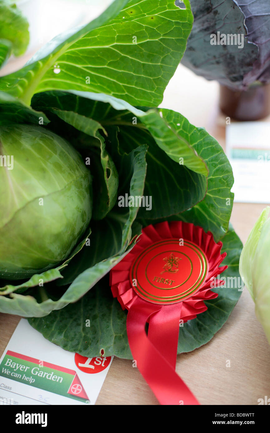Entries into the annual Village Show in Combe St. Nicholas, Somerset UK. - Stock Image