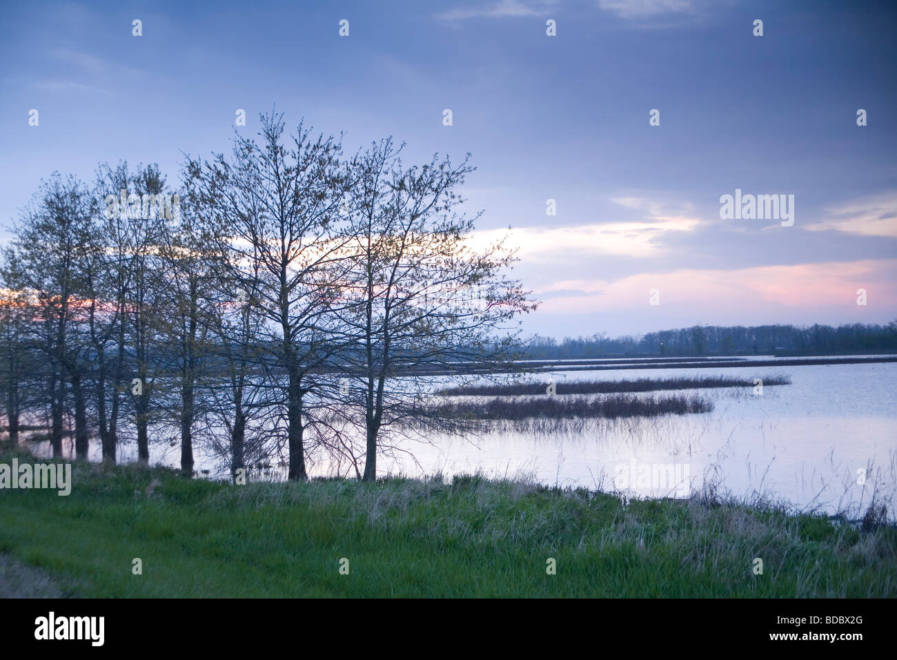 Otter Slough Conservation Area - Stock Image