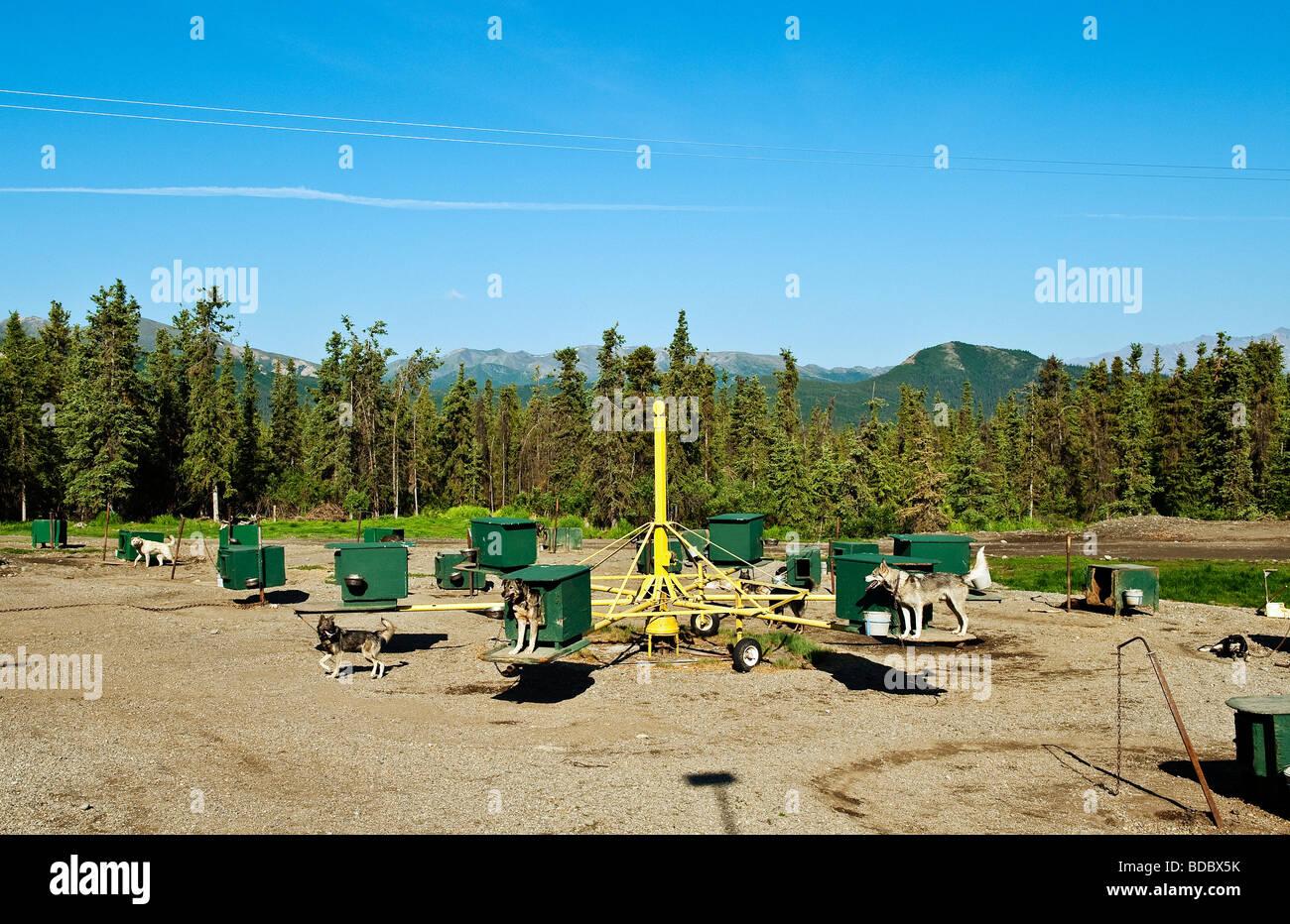 Jeff King's Husky Homestead Kennel Denali Alaska - Stock Image