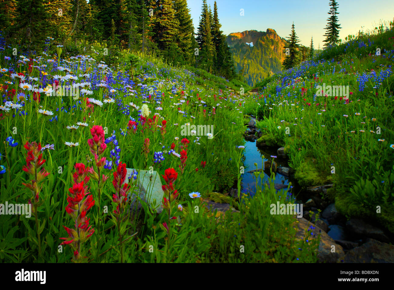 Wildflowers lining a creek along Naches Peak trail in Mount Rainier National Park - Stock Image