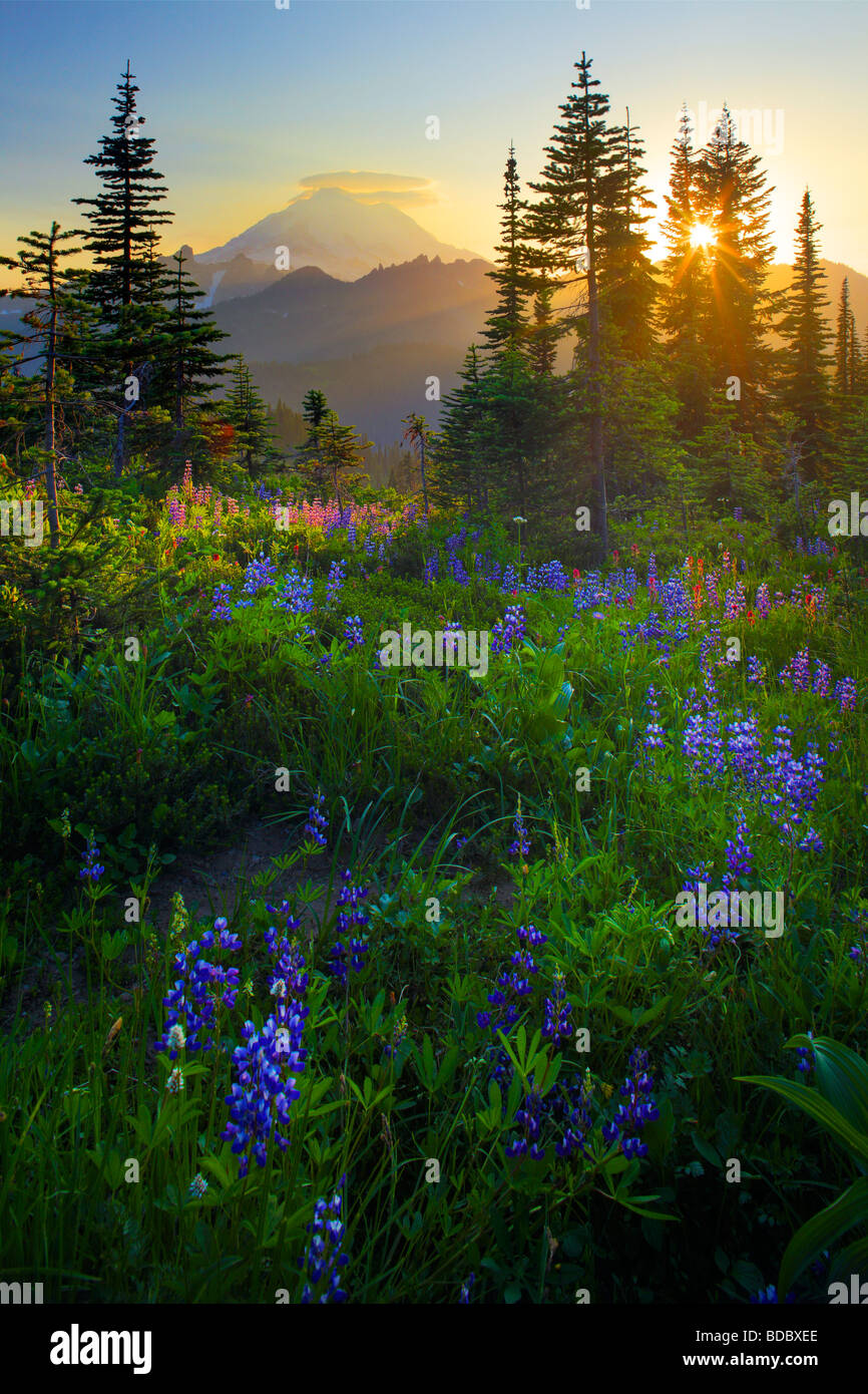 The sun is setting behind Mount Rainier from Naches Peak loop trail - Stock Image