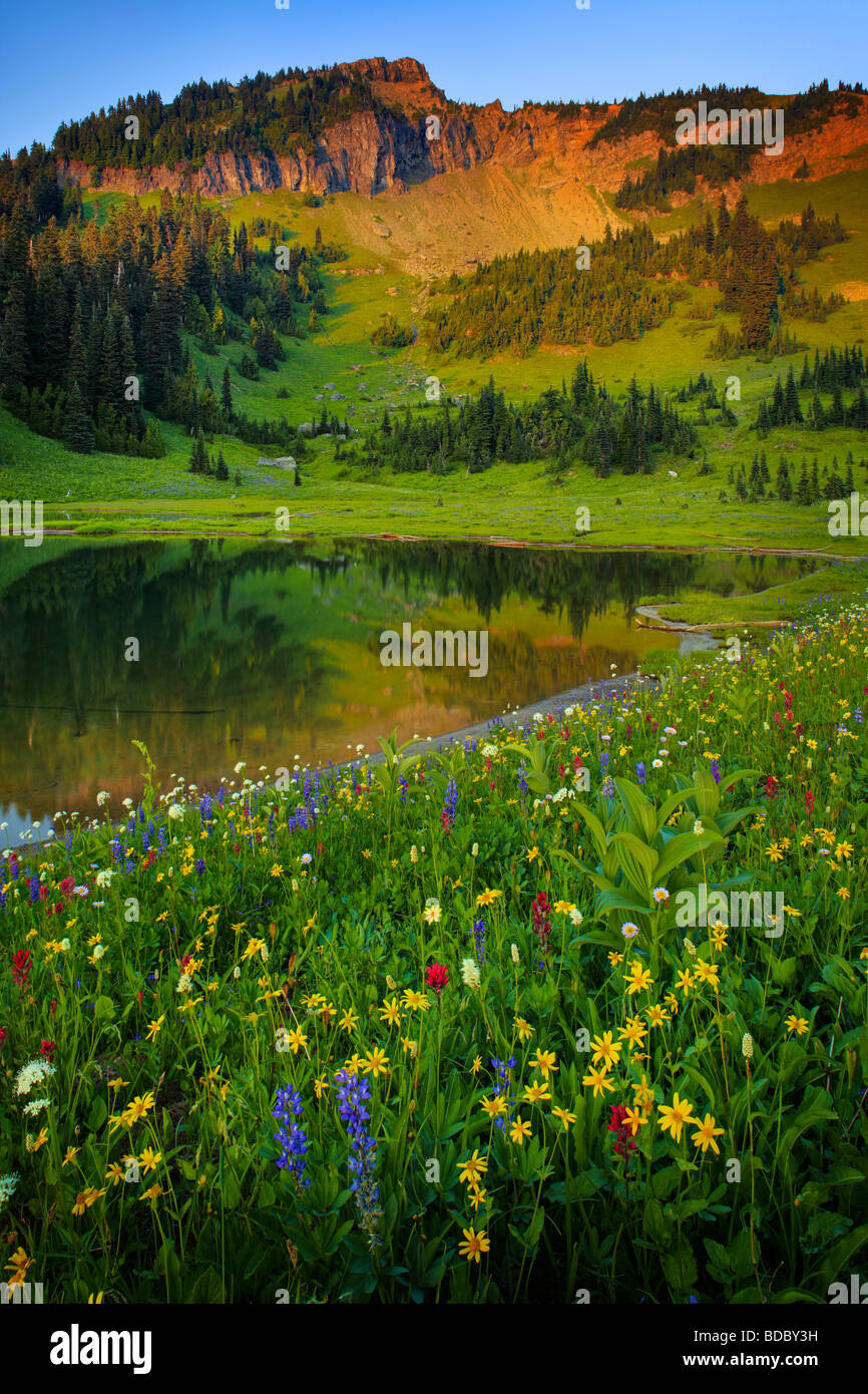 Summer wildflowers at Tipsoo Lake in Mount Rainier National Park - Stock Image