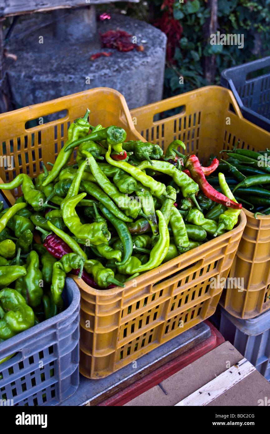 Green pepper in a plastic tray greengrocery in Calabria south of Italy - Stock Image