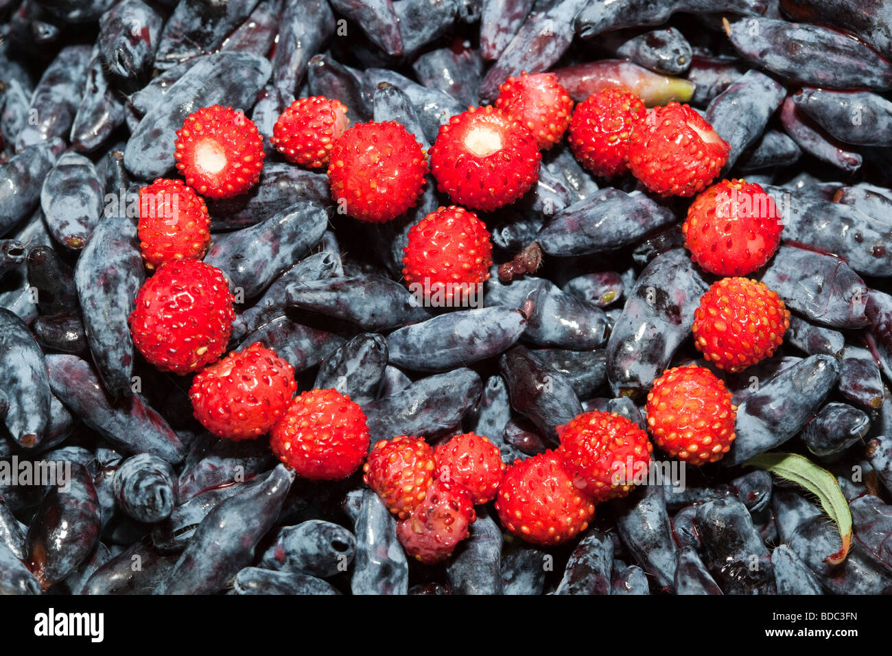 Heart from berries of wild strawberry against a honeysuckle - Stock Image