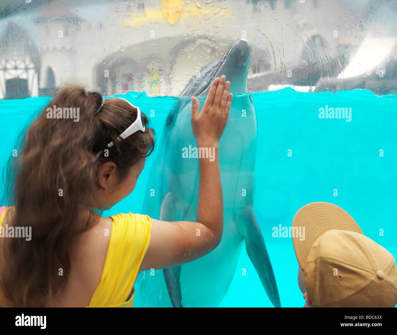People Watching Dolphins at Marineland Niagara Falls Ontario Canad - Stock Image