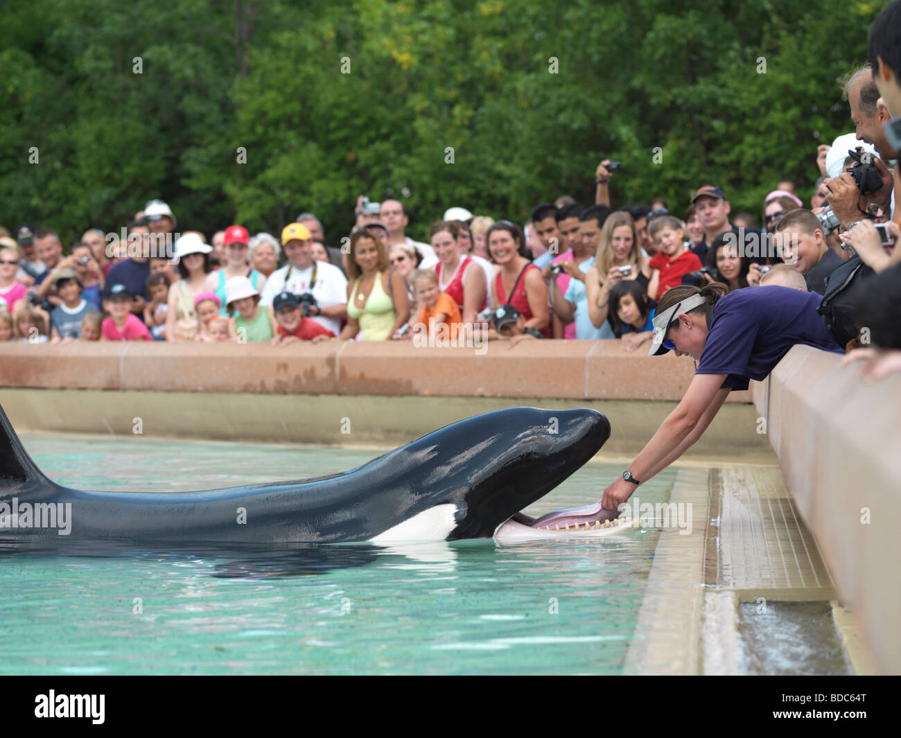 People watching Killer Whale show at Marineland Niagara Falls - Stock Image