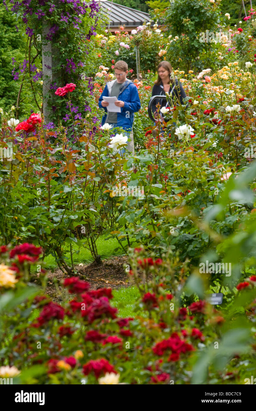 Roses In Garden: People Visiting Rose Garden Stock Photos & People Visiting