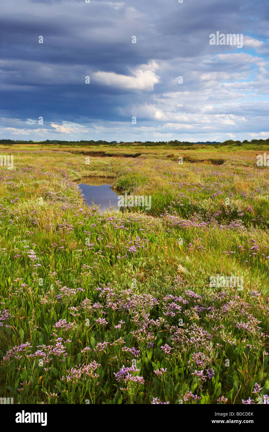 A summer evening showing the Saltmarshes near Burnham Deepdale on the North Norfolk Coast Stock Photo
