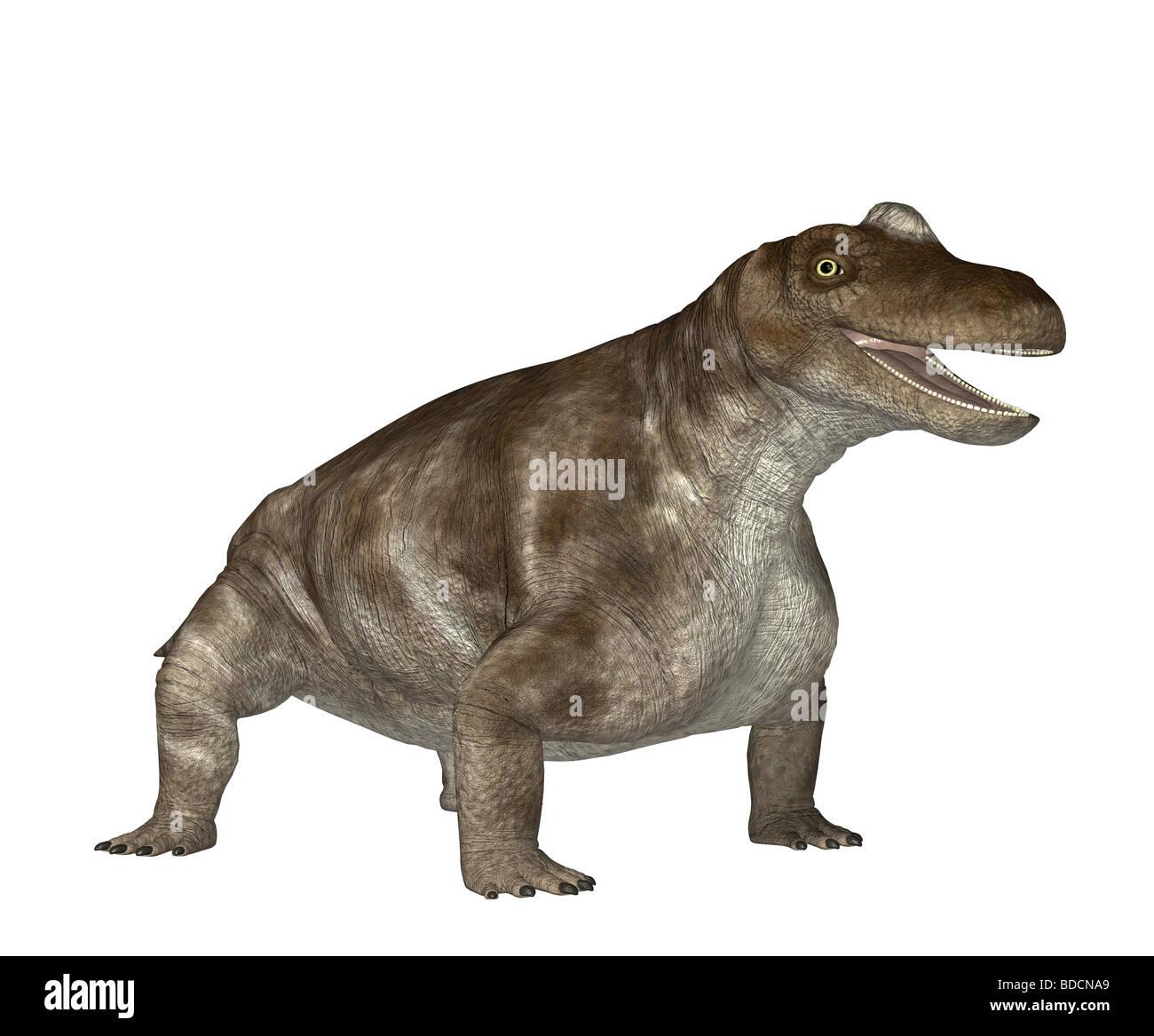dinosaur Keratocephalus Stock Photo