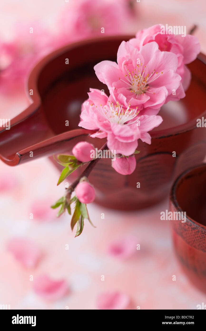 Sake cup and peach blossoms - Stock Image