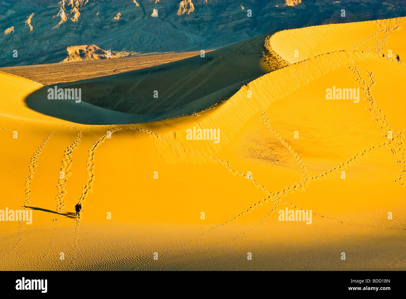 Hiker at Mesquite Flat Sand Dunes at sunrise Death Valley National Park California USA - Stock Image