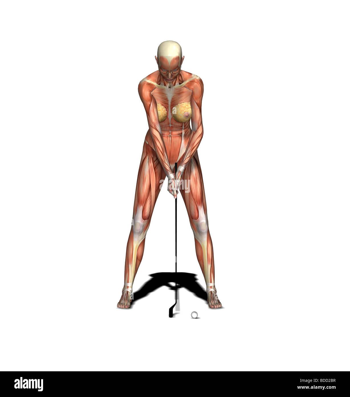 Erfreut Anatomie Und Physiologie Neunte Ausgabe Galerie ...