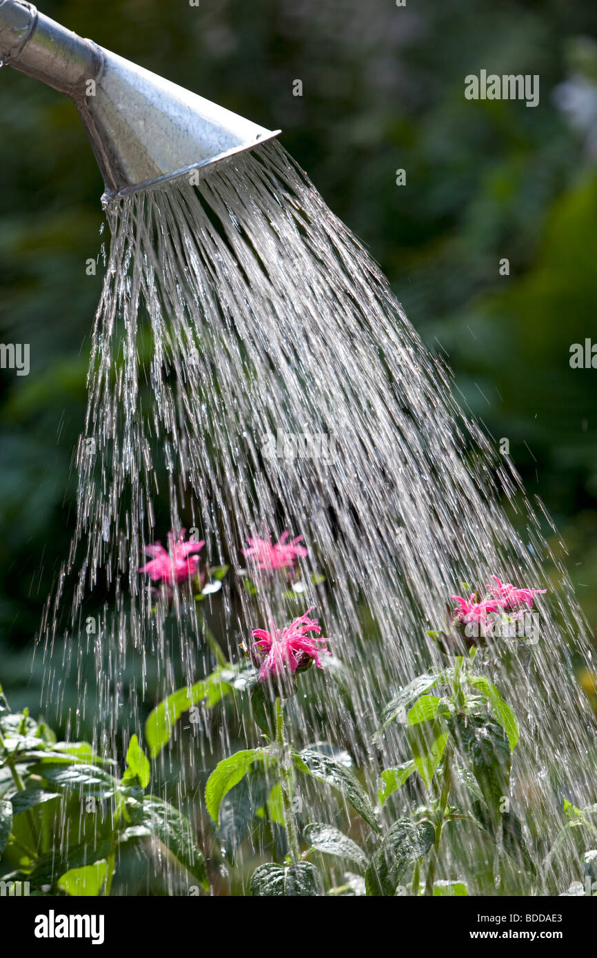 Pouring water with a watering-can in the garden Stock Photo