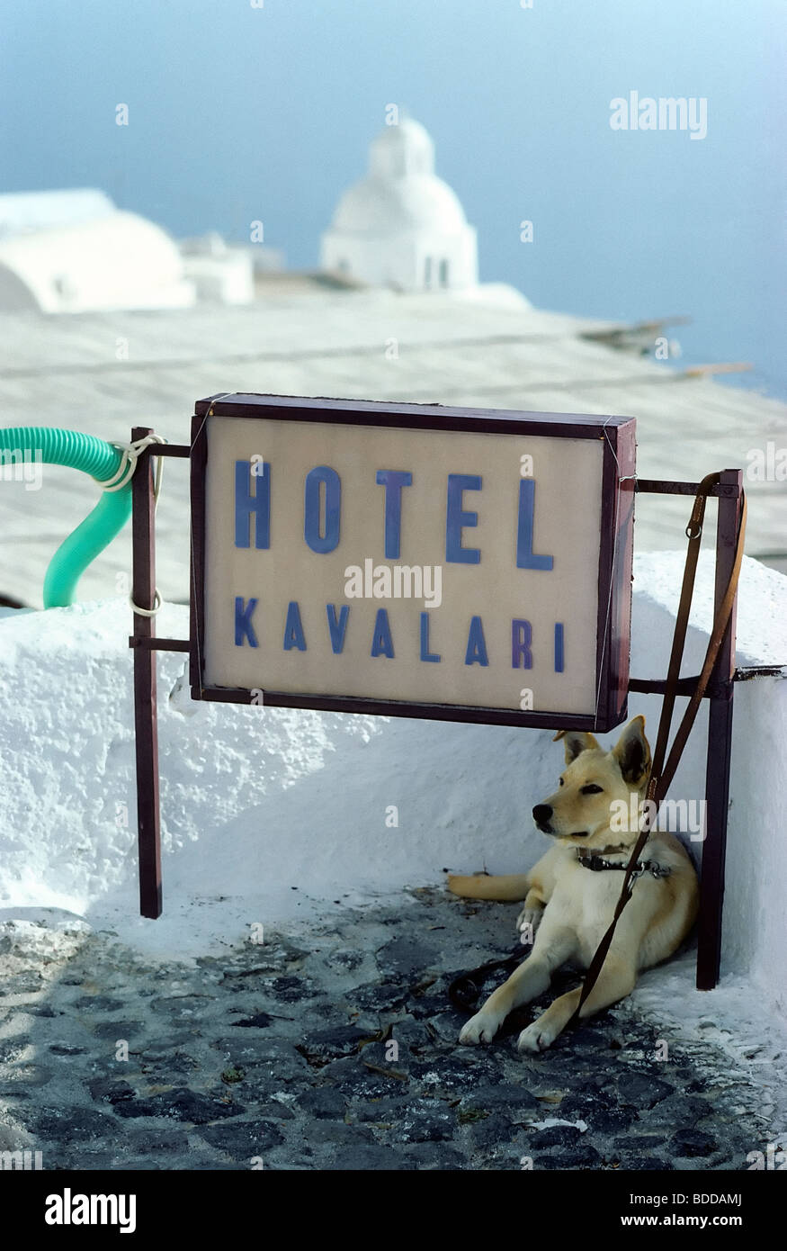 Sign of a small hotel, leashed dog, Fira town, Santorini, Thira, Cyclades, Greece, Europe - Stock Image