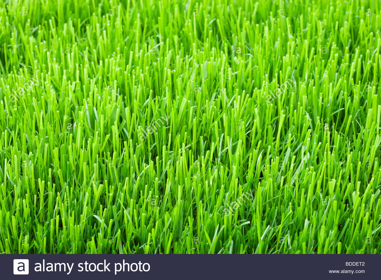 Lawn grass Stock Photo