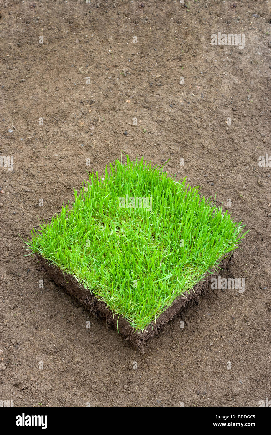 Square of new turf on prepared soil - Stock Image