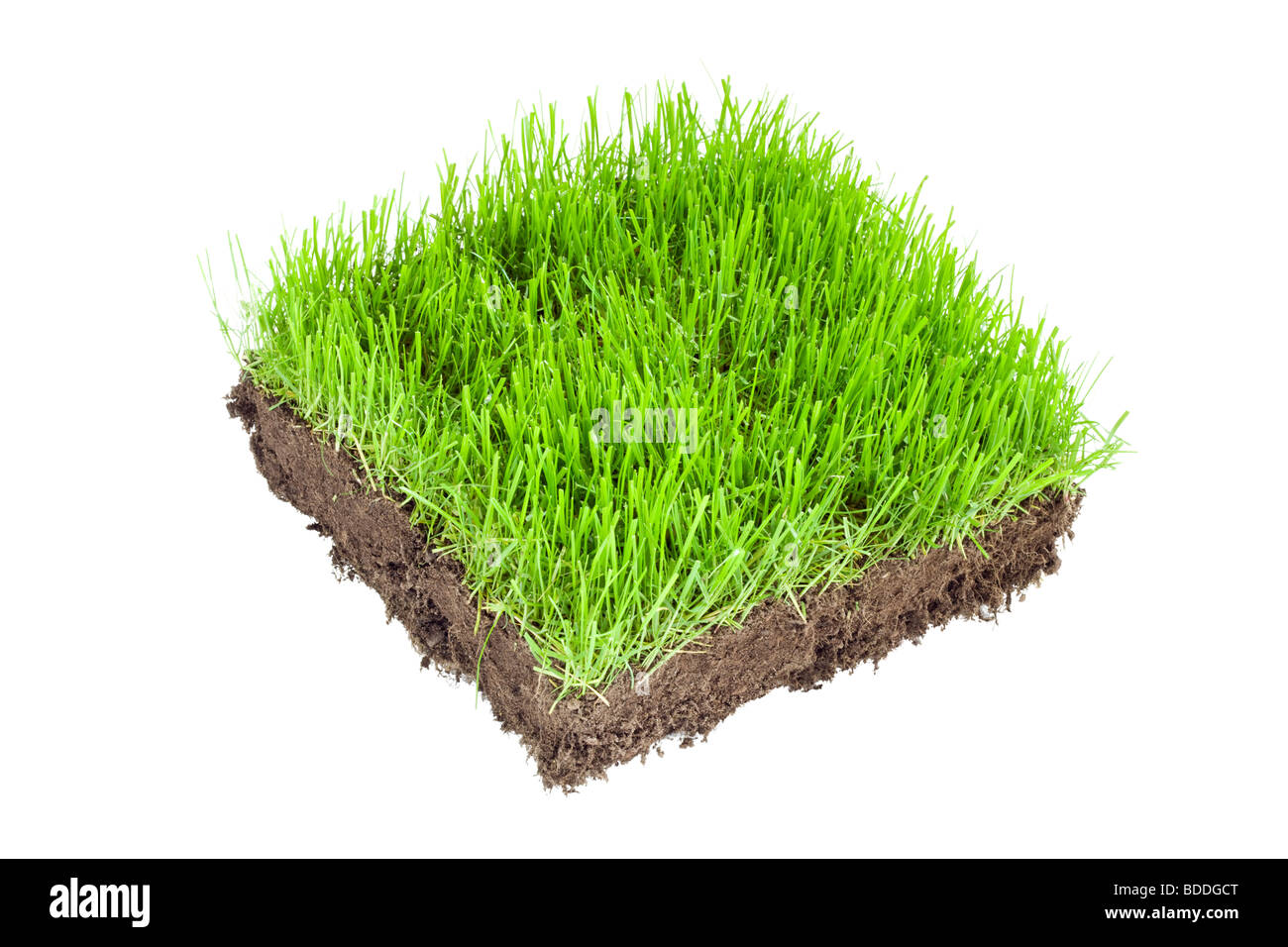Square of new turf - Stock Image