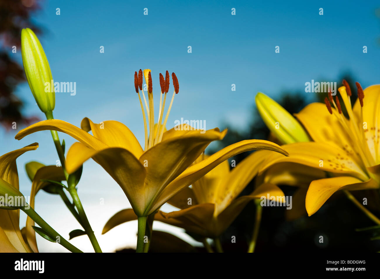 At Lilys Stock Photos & At Lilys Stock Images - Alamy