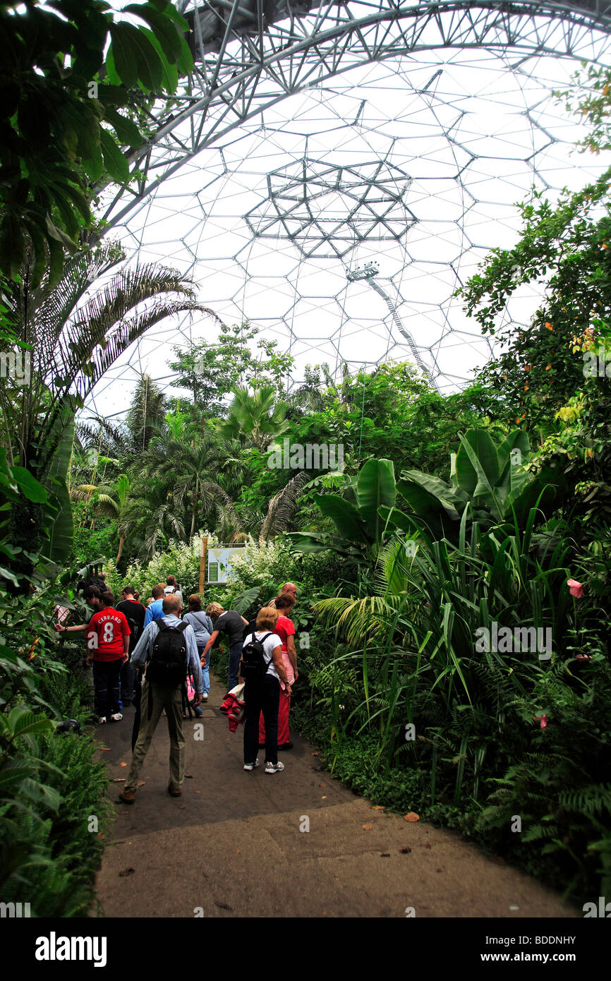 2507. Rain Forest Biomes, Eden Project, Bodelva, St Austell, Cornwall - Stock Image