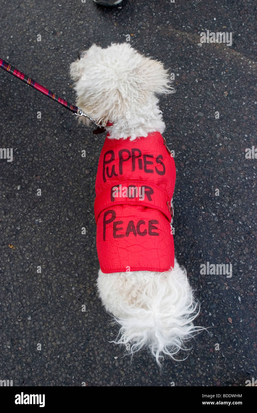 A dog on a Stop the War protest. - Stock Image