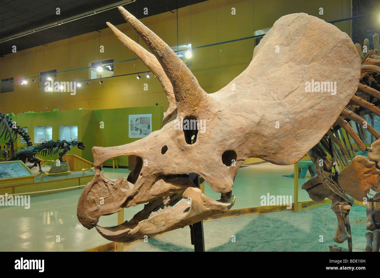 Triceratops s perhaps the most recognizable dinosaur outside of academic circles. This head is at Wyoming State - Stock Image