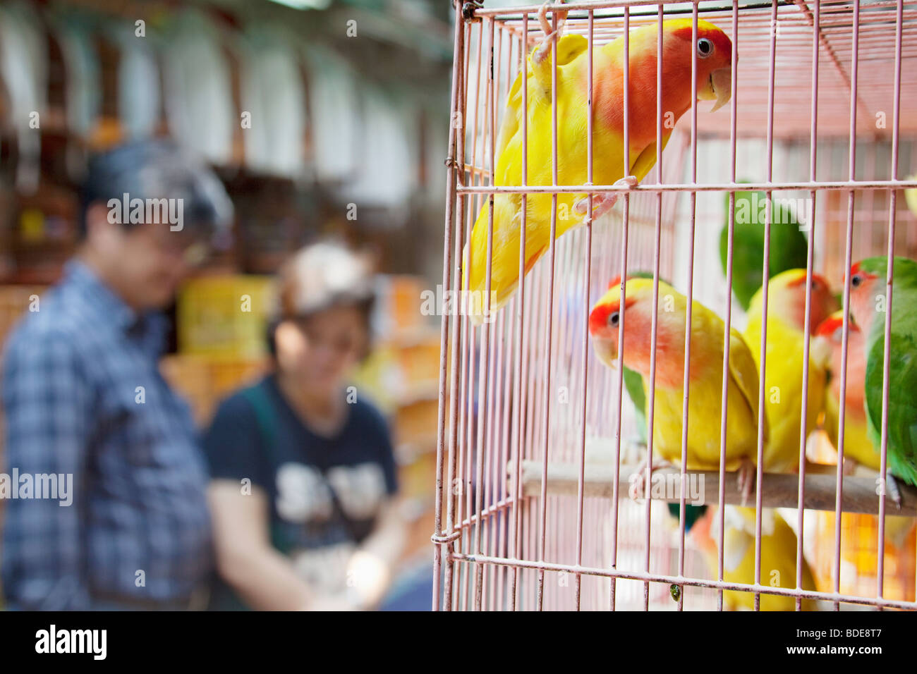 Birds in cage ready for sale Bird Market, Mong Kok in Hong Kong, China. - Stock Image